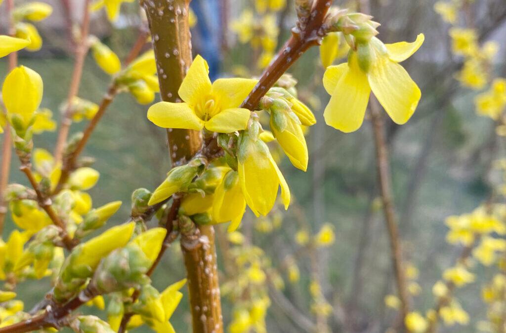 Der Frühling steht vor der Türe